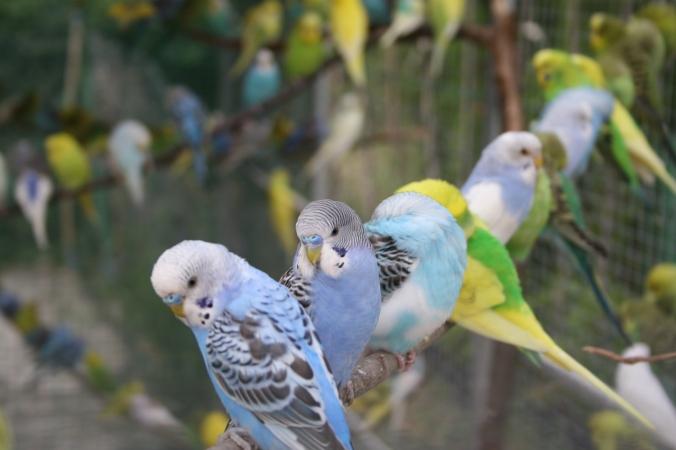 bird-cage-1393407-1279x852