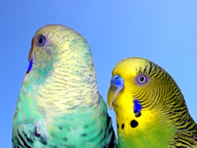 birds-1384136-640x480