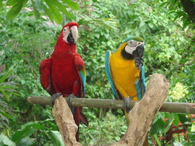 macaw-1246525-640x480