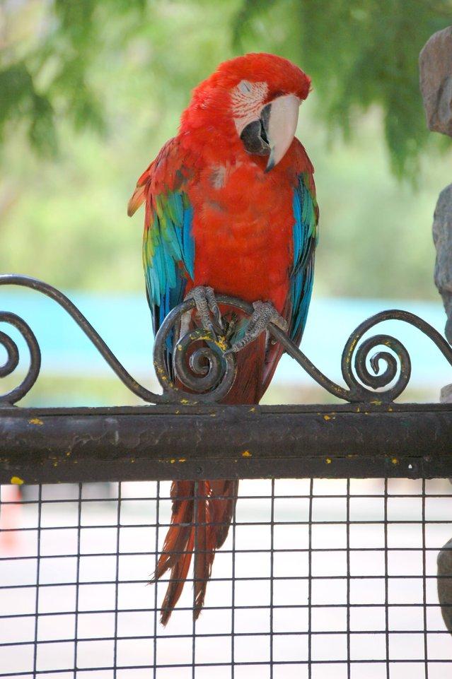 parrot-1572979-639x961