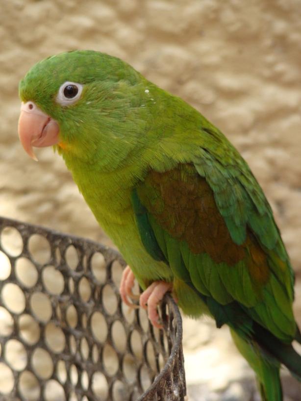 parrot-5-1250337-639x852