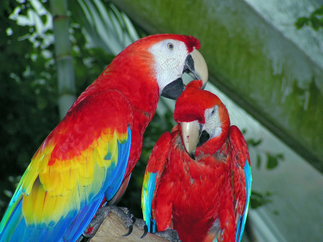 parrots-1380029-640x480
