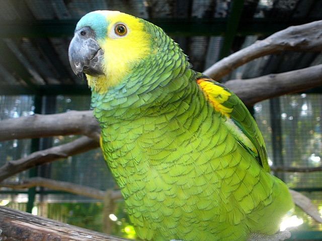 south-american-parrots-1362496-640x480