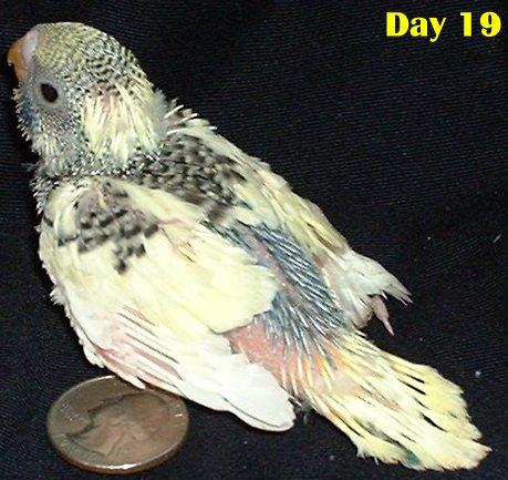 parakeet | Feisty Feathers