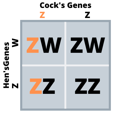 sex linked genes1